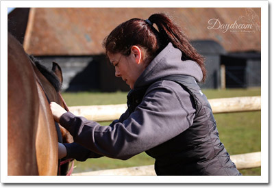 Sarah Matthews - Horse Massage Therapy in Progress