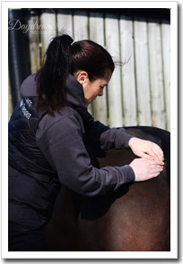 Sarah applying equine massage ttherapy
